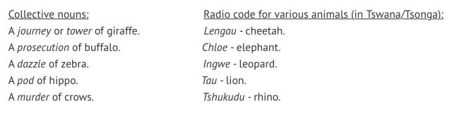 tshukudu facts
