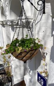 spring hanging basket