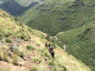 Lesotho Pony