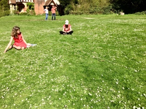 Daisy chains at Clivedon Park.