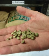 Green pre-roasted coffee beans