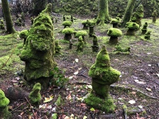 Old gnomes.
