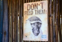 Don't feed the monkeys
