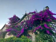 Beautiful Bougainvillaea