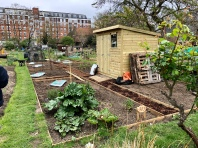 Our allotment - no. 303