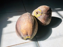 Coconuts - sadly we didn't get to taste them.