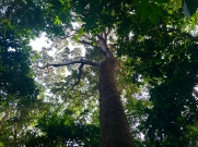 Arboretum Raponda Walker, Libreville.