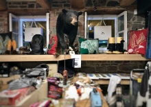 A bear in a shop - as they do.