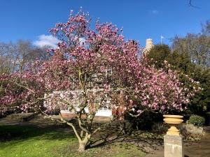 Bishops park blossoms